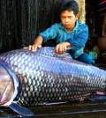 fish rang