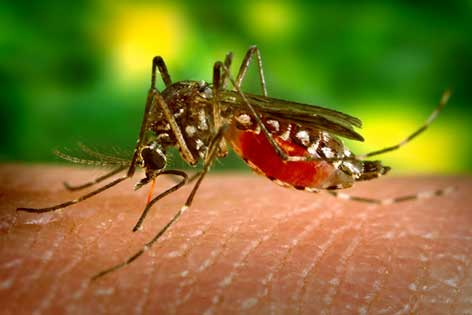 1219381132_1UORkiPM_Dengue_fever_Bahamas
