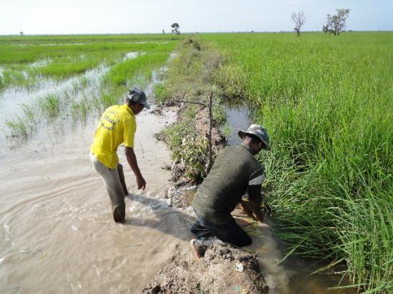 1219381132_U27sWtzo_rice_flooding005