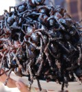 03-Fried-Tarantulas-Global-Delicacies-1