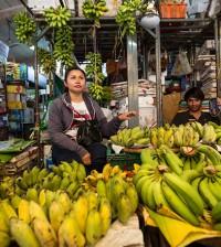 바나나 수출