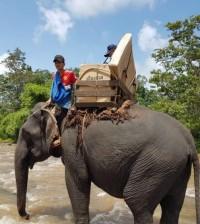 선거 코끼리