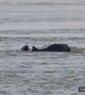 03돌고래