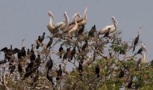 03 자연유산목록Birds