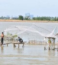 The closed fishing season is set to begin early June this year. KT/Pann Rachana