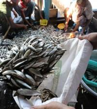 004 어류생산