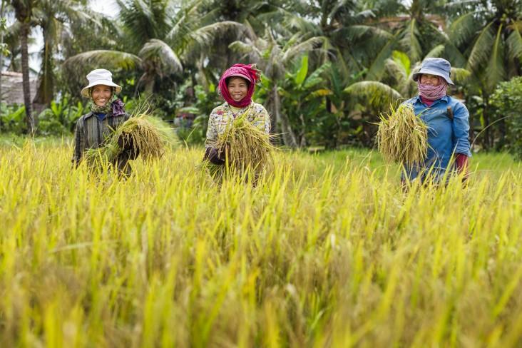2021-05-25 캄보디아 수출 농산품 중 벼가 가장 큰 비중을 차지한다