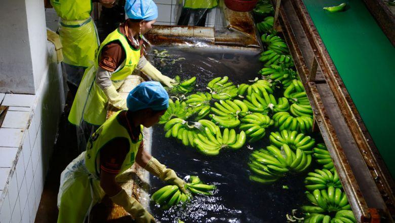 바나나도 캄보디아 주요 수출용 농산품 중 하나이다