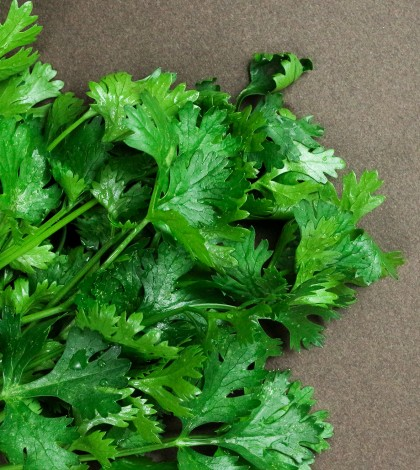 Composition of green coriander leaves and fresh vegetables