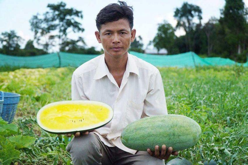 우더미은쩨이주에서 노란 수박을 성공적으로 재배하는 데 성공한 임 치은씨