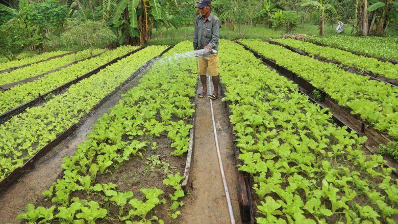 캄보디아는 작년 한 해 1300만 톤 이상의 농산물을 해외로 수출했다.