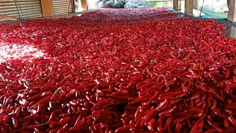 캄보디아산 고추가 태국으로 대량 수출되고 있다