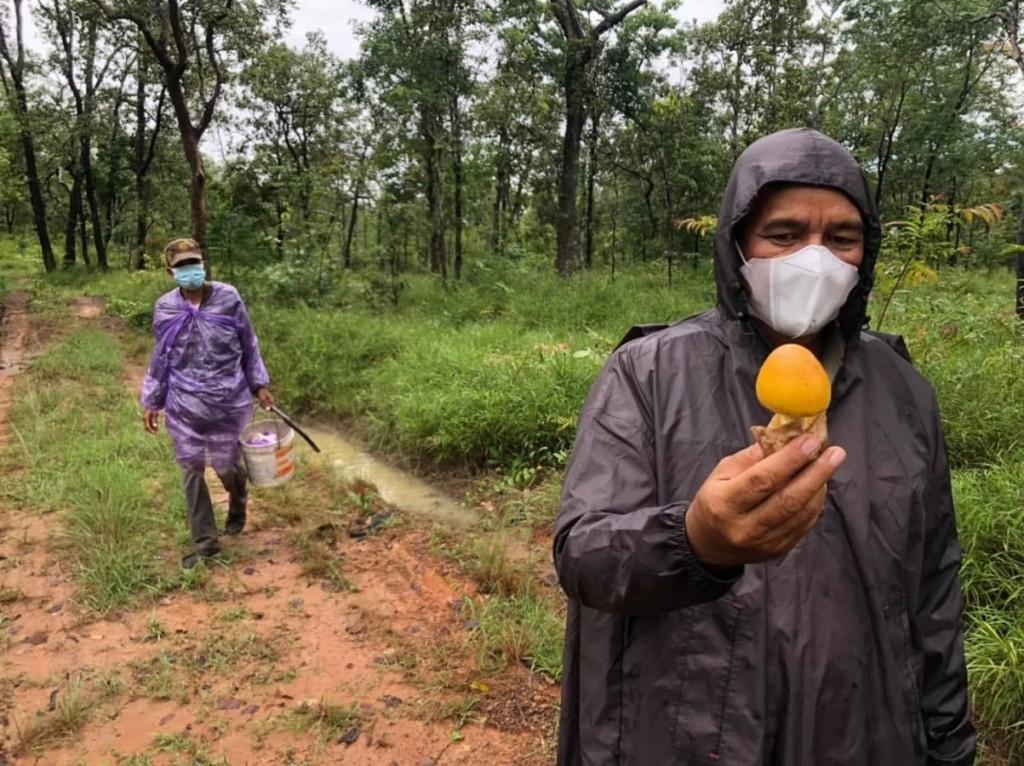 캄보디아 농민들이 자연산 버섯으로 추가 소득을 올리고 있다